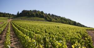 Photo des vignes du Premier Cru Clos des Barraults à Mercurey