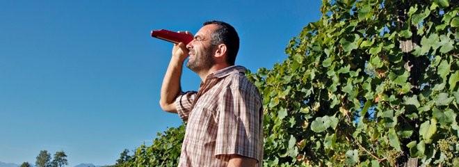 Un vigneron contrôle la maturité des raisins avec un réfractomètre